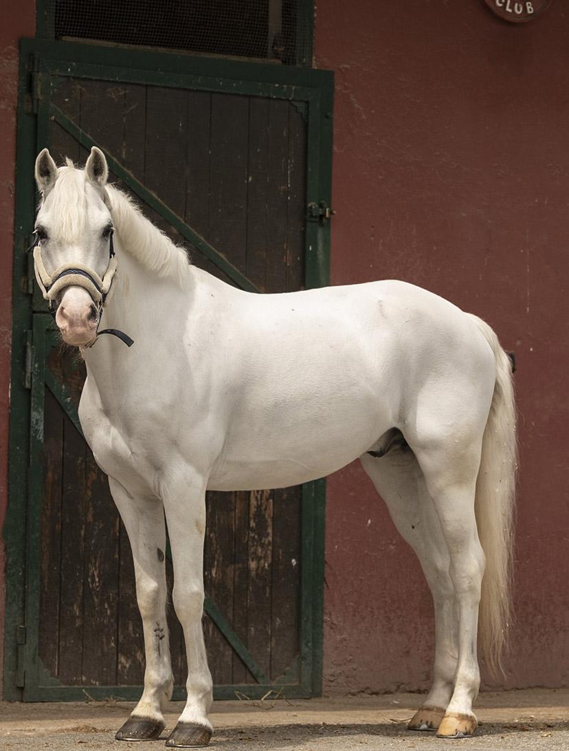 roma-pony-club-home-2