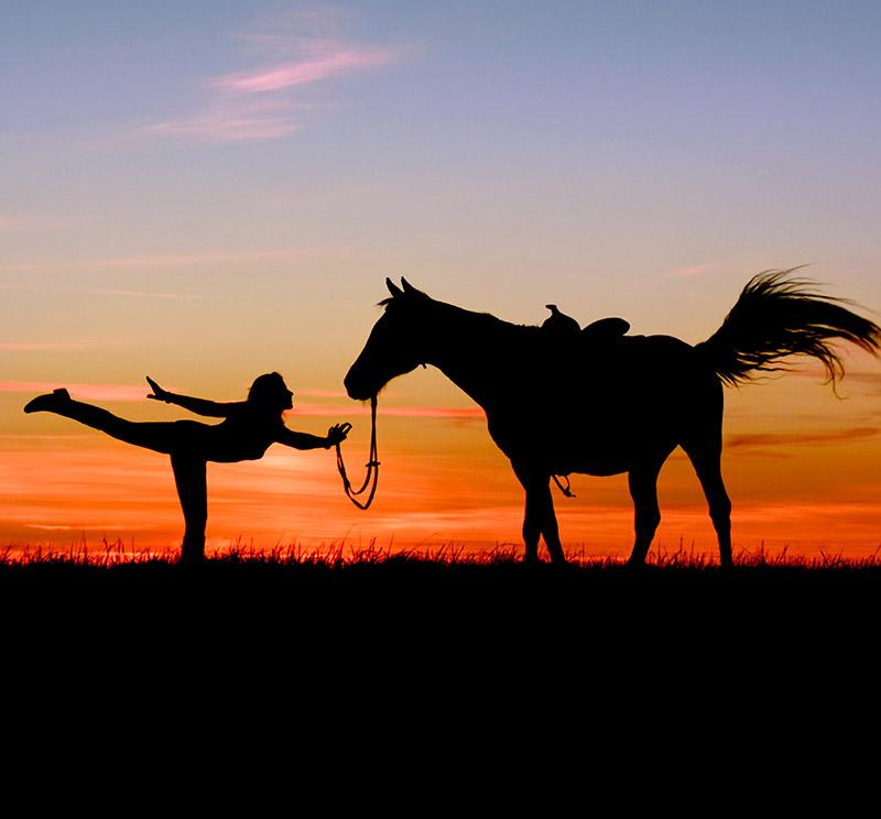 yoga horse