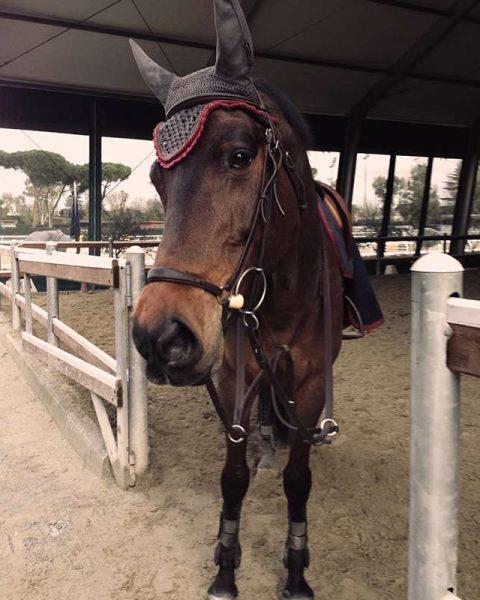 scuola-cavalli-06